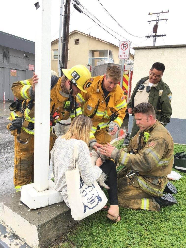 Kiss of life: Firefighter pulls lifeless dog from burning building before reviving it with CPR (Santa Monica Fire Department)