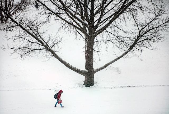 A young woman crosses the University of Illinois campus, as seen from the College of Agricultural, Consumer and Environmental Sciences Library, Information and Alumni Center, in Urbana, Ill., on Tuesday, Feb. 4, 2014. (AP Photo/The News-Gazette, Heather Coit)