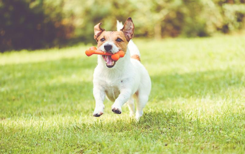 Celebrate National Pet Day by spoiling your pup with a new BarkBox. (Photo: Getty Images)