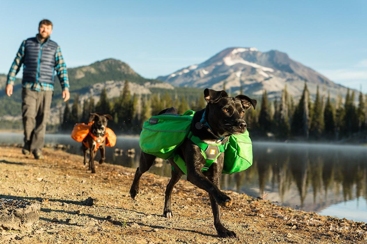 """<p>""""Dogs love having jobs, and if they're focused on walking and carrying, they're much less likely to chase squirrels or bicyclists."""" Say no more, dog whisperer <a href=""""https://www.cesarsway.com/shop/cesar-millan-dog-backpack"""" target=""""_blank"""">Cesar Millan</a>!</p><p>If you and your four-legged best friend love taking all the walks, sniffing all the bushes, chasing all the squirrels, and marking all the trees together, then a dog backpack is a <em>must</em>! It's the perfect way to free up precious space in your <a href=""""https://www.bestproducts.com/fitness/equipment/g1772/best-hiking-backpacks-daypacks/"""" target=""""_blank"""">hiking backpack</a>, while still being sure your pup has plenty of food, water, treats, and poo bags (leave no trace, ya'll!). Choose from these top-rated dog backpacks, then head outdoors for a day of adventure. </p>"""