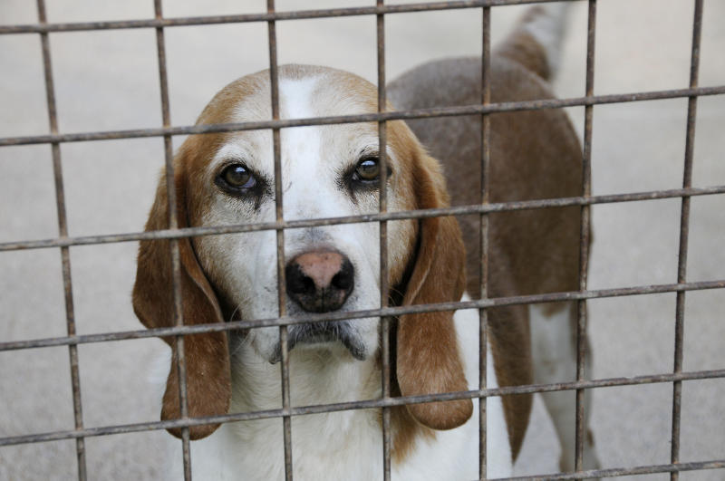 The RSPCA receives more than a million calls a year to its animal cruelty hotline (Andia/Universal Images Group via Getty Images)