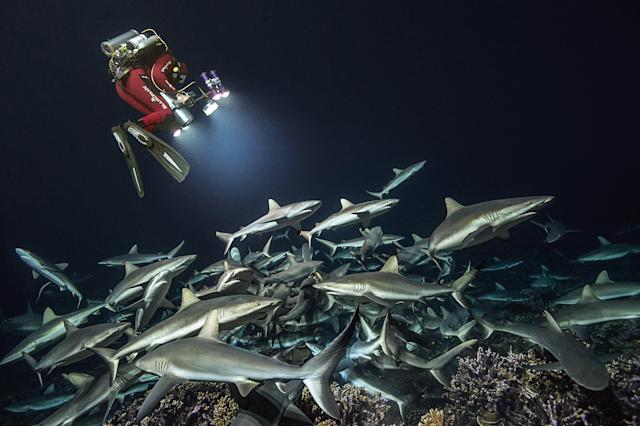 <p>In total, this set of images required 21 weeks of diving, day and night, spanning four years and taking 85,000 images. (Photo: Caters News) </p>