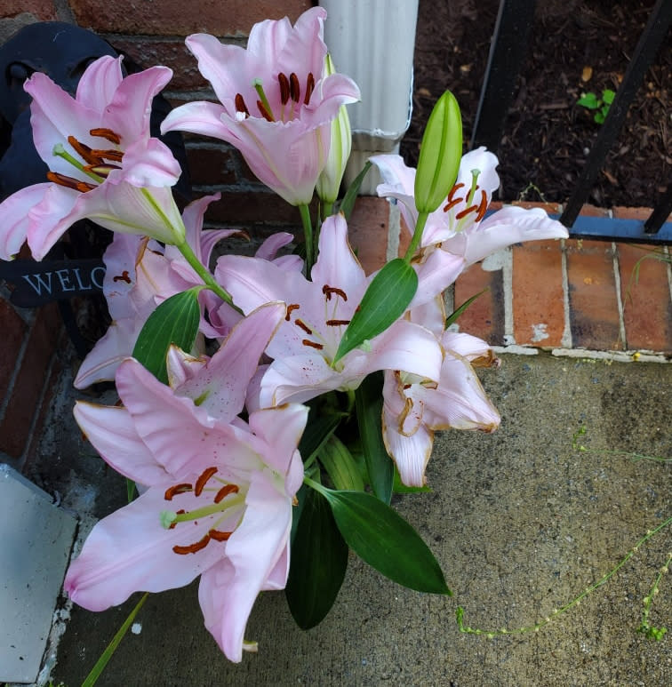 Pink lillies are pictured.