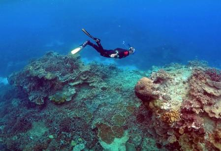 Australia's Great Barrier Reef in 'very poor' condition: government agency