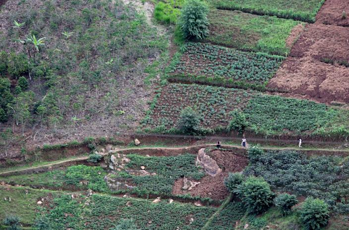 Terrace farming, which helps decrease erosion and surface runoff, is seen on November 15, 2017 in the Rulindo District, Rwanda. Wood gathering causes much of the deforestation and soil erosion in the country. (Photograph by Yana Paskova)