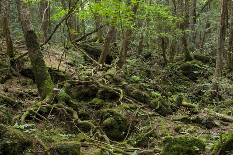 Aokigahara Forest is known as a site where people go to commit suicide. Source: Getty