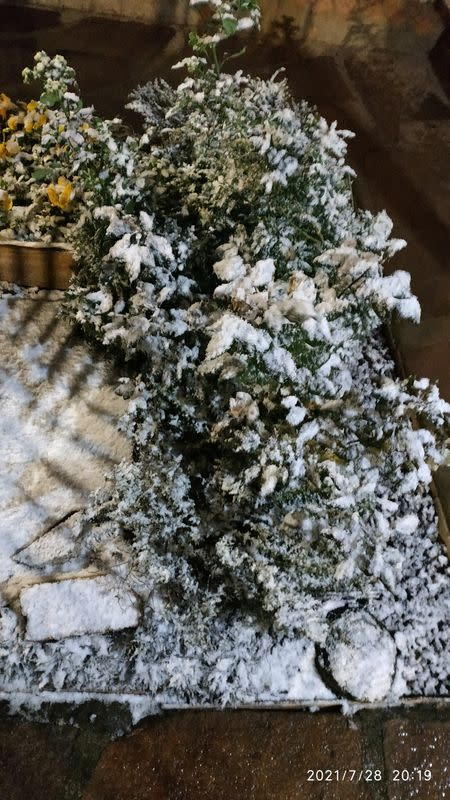 General view of plants covered in snow in Vacaria