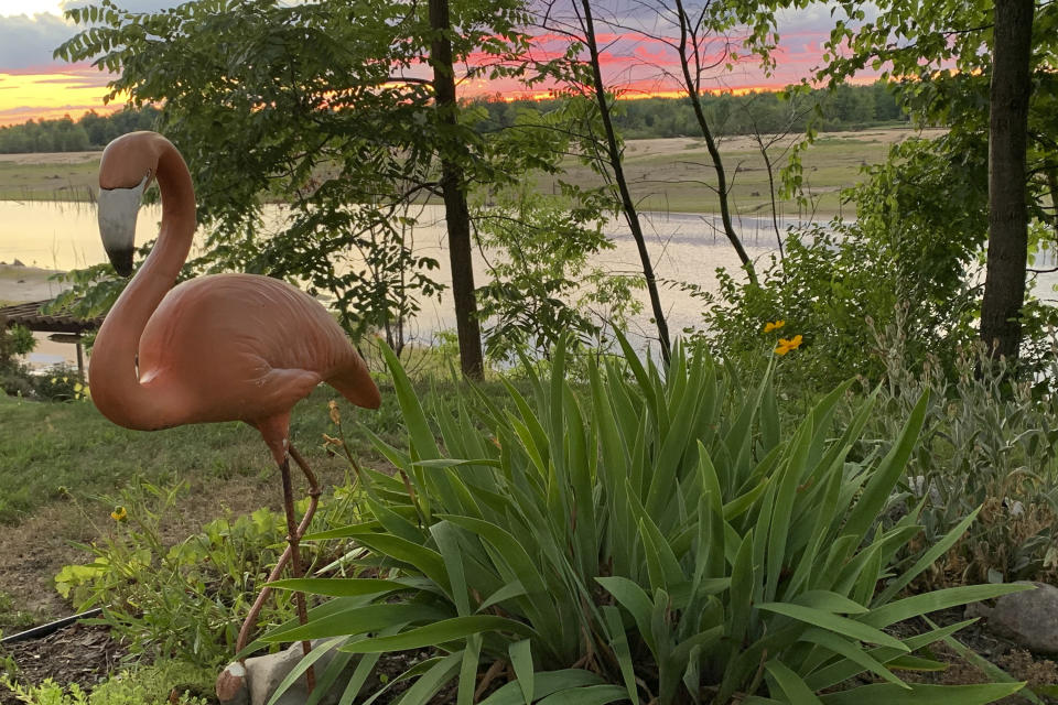 A lawn flamingo turns its back on an equally colorful sunset as the Tittabawassee River cuts a channel through the bed of what was once Wixom Lake near Edenville, Mich,., July 30, 2020. Nature is returning to a string of mid-Michigan lakes that drained in May after two dams failed during torrential rains. (AP Photo/Jeff McMillan)