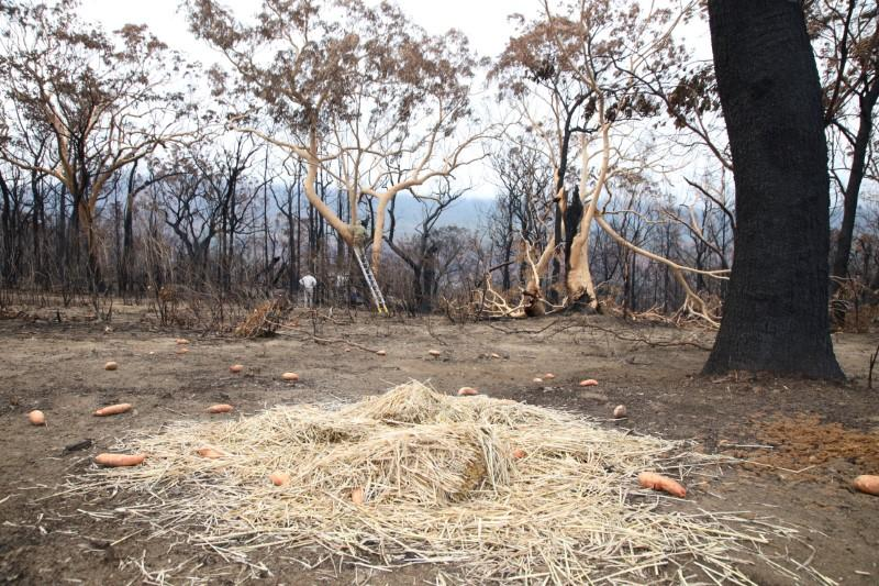 Australia's flame-scarred Kangaroo Valley calls for tourists to return