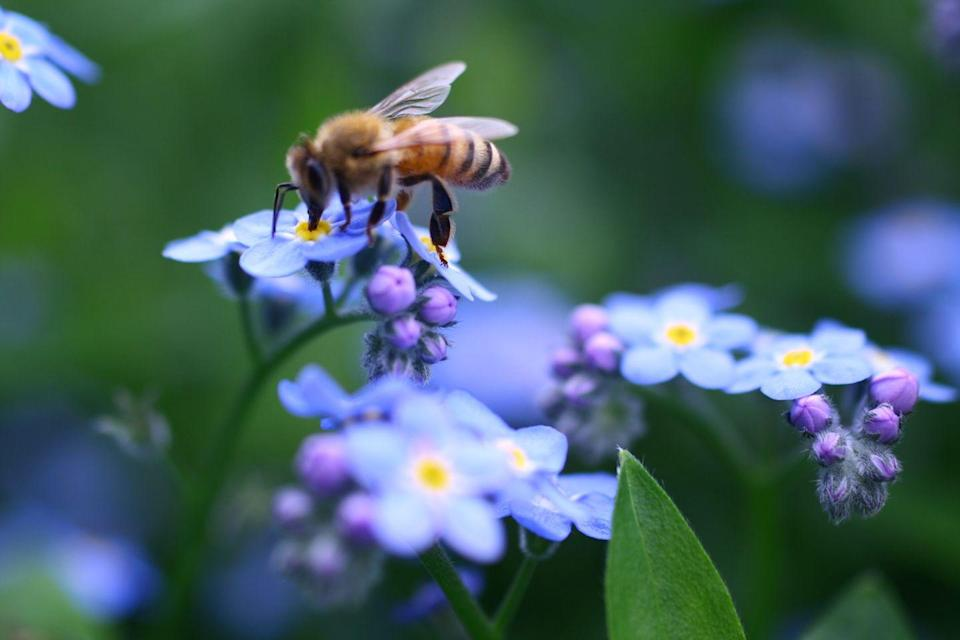 """<p><strong>Honey Bee<br><br></strong>In 1977, <a href=""""https://www.wisconsin.gov/Pages/WisconsinforKids.aspx"""" rel=""""nofollow noopener"""" target=""""_blank"""" data-ylk=""""slk:a third grade class asked the legislature"""" class=""""link rapid-noclick-resp"""">a third grade class asked the legislature </a>to select the honey bee as the state insect, and they did. </p>"""