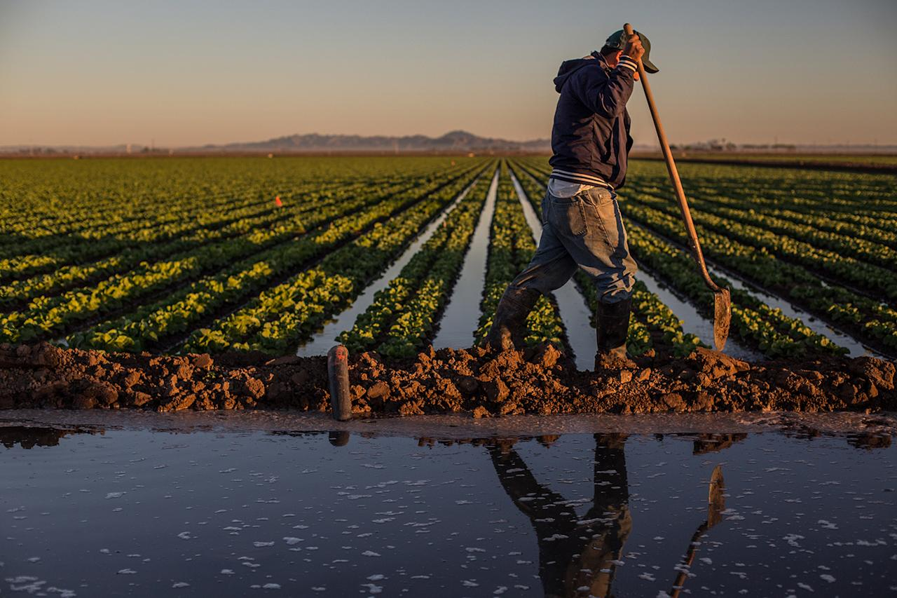 <p>Farming along the Lower Colorado River. (Photo: Amy Martin) </p>