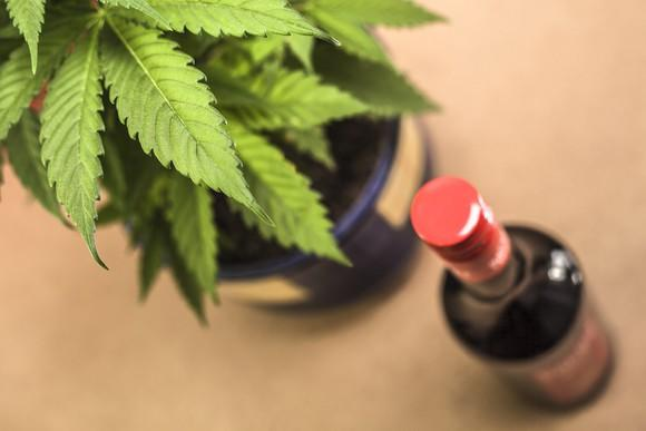 A potted cannabis plant next to a bottle of alcohol.
