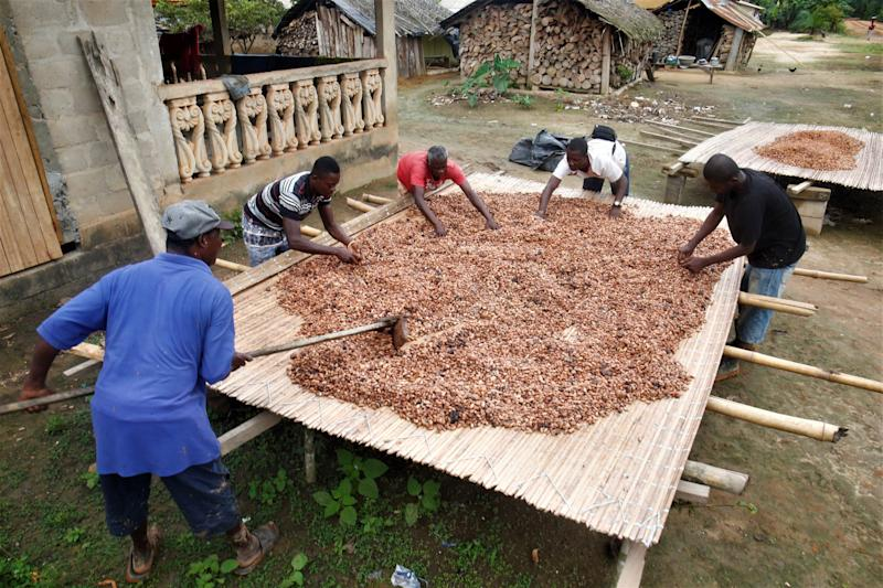 Cocoa farmers dry cocoa beans in the village of Andou M'batto in Alepe, Ivory Coast. (Photo: Thierry Gouegnon for HuffPost)