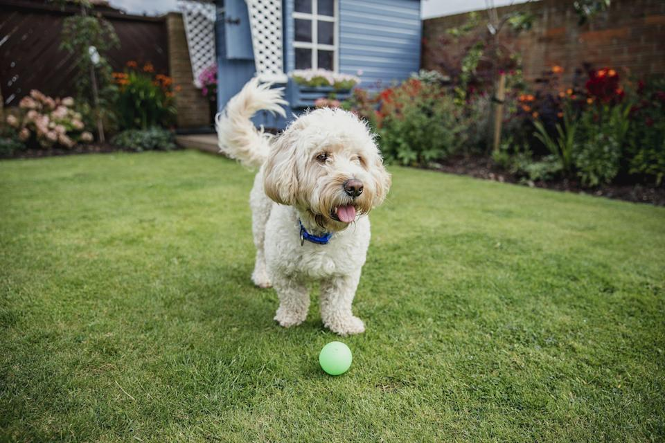 """<p>Looking for a relaxing place to escape for a holiday as we ease out of lockdown? With self-catering breaks allowed in England as early as April 12th, it's time to get back out there and take your four-legged friend too as you check into the UK's best <a href=""""https://airbnb.pvxt.net/6beWoK"""" rel=""""nofollow noopener"""" target=""""_blank"""" data-ylk=""""slk:dog-friendly Airbnbs"""" class=""""link rapid-noclick-resp"""">dog-friendly Airbnbs</a>.</p><p>After all this time at home we can't imagine leaving the dog behind for our first getaway after lockdown, which is why a <a href=""""https://www.countryliving.com/uk/travel-ideas/dog-friendly/g24777445/dog-friendly-cottages-uk/"""" rel=""""nofollow noopener"""" target=""""_blank"""" data-ylk=""""slk:dog-friendly"""" class=""""link rapid-noclick-resp"""">dog-friendly</a> Airbnb is the answer to spending a few days somewhere beautiful, while keeping the whole household together.</p><p>Country Living's pick of the best dog-friendly Airbnbs around Britain allow both you and your dog to explore a new destination. With walks aplenty, sprawling grounds and local pubs nearby, there's lots to keep everyone entertained during a <a href=""""https://www.countryliving.com/uk/travel-ideas/dog-friendly/"""" rel=""""nofollow noopener"""" target=""""_blank"""" data-ylk=""""slk:pet-friendly staycation"""" class=""""link rapid-noclick-resp"""">pet-friendly staycation</a> at these dog-friendly Airbnbs.</p><p>Many Airbnbs offer plenty of space for your dog to run around or are located close to parks or beaches where you can go for long walks together.</p><h2 class=""""body-h2"""">Why choose a dog-friendly Airbnb over a hotel?</h2><p>Unlike a hotel, a dog-friendly Airbnb allows you to book an entire property, providing more space for you and your pet. A stay at a pet-friendly Airbnb will give you more freedom to spend time with your dog in places they might be restricted to enter at a hotel. Having your own space could ensure you can dine with them, relax by the fire together or allow you to enjoy a dip in the hot tub while t"""