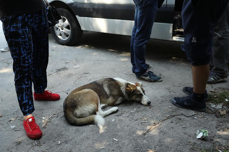 A tagged, stray dog lies among tourists about to board a bus inside the exclusion zone near the Chernobyl nuclear power plant on August 19, 2017.