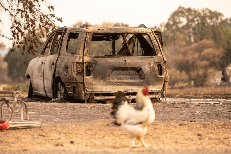 A petty dispute that turned deadly in Iraq involved a rooster in heat that trespassed onto a neighbour's land in search of hens