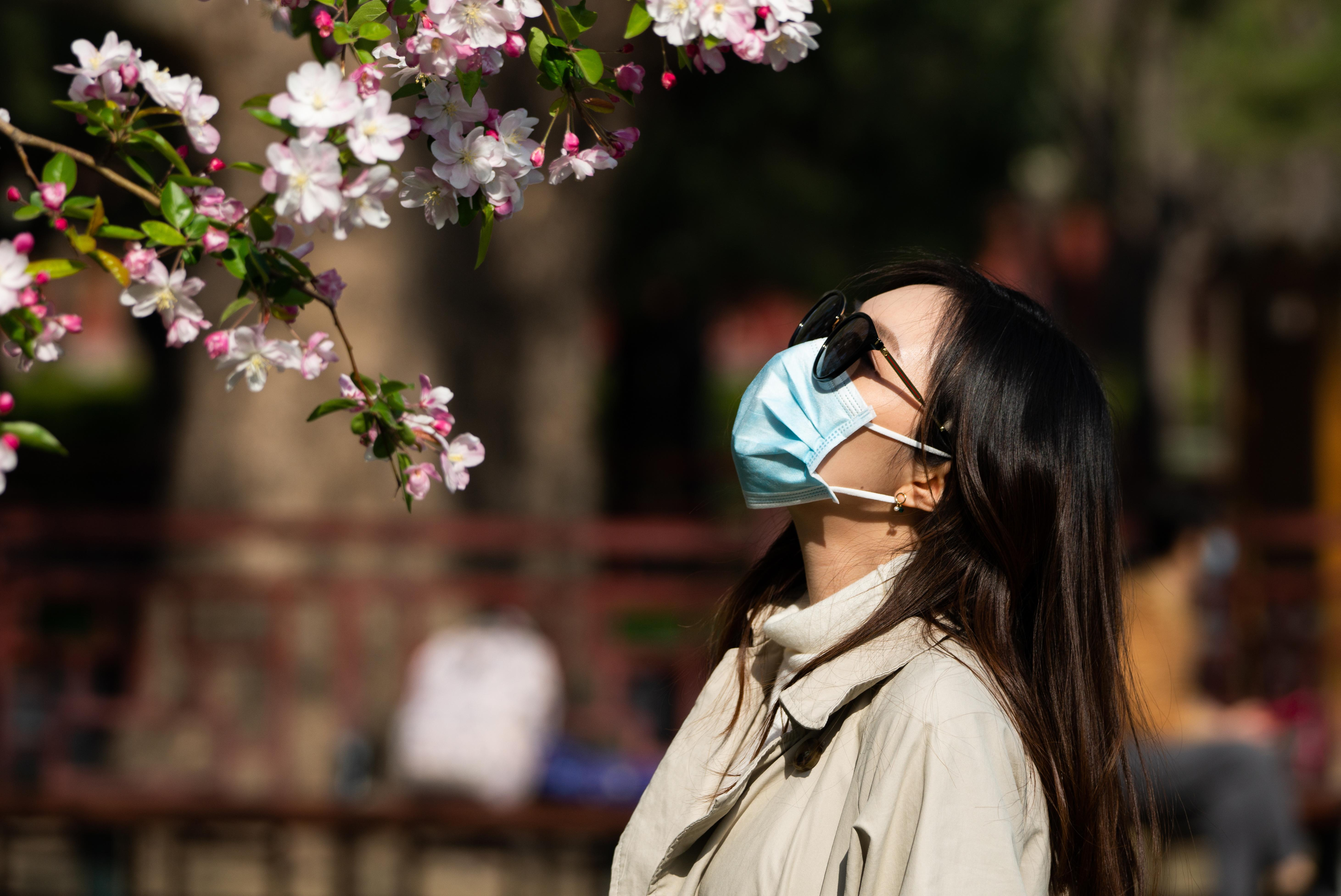 BEIJING, CHINA - APRIL 7, 2020: A young woman in a face mask admires tree blossoms at Ritan Park; the Chinese authorities declaring the spread of the COVID-19 epidemic, on the whole, successfully contained, residents of Beijing began to spend more time outside and visit city parks. Artyom IVanov/TASS (Photo by Artyom Ivanov\TASS via Getty Images)