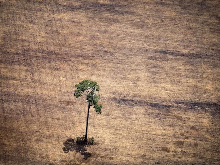 <p>Deforestation in the Amazon rainforest</p> (AFP/Getty Images)
