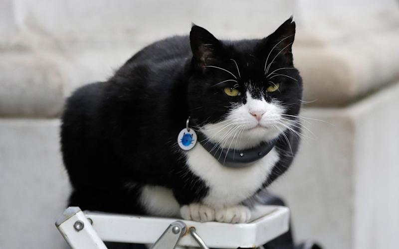 Palmerston, the Foreign Office cat sits on a photographers ladder as media await the departure of Britain's Prime Minister Theresa May from 10 Downing Street in London, Tuesday, Feb. 12, 2019 - Kirsty Wigglesworth