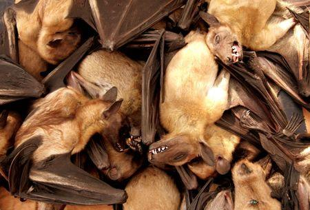 File picture shows fruit bats for sale at a food market in Brazzavile