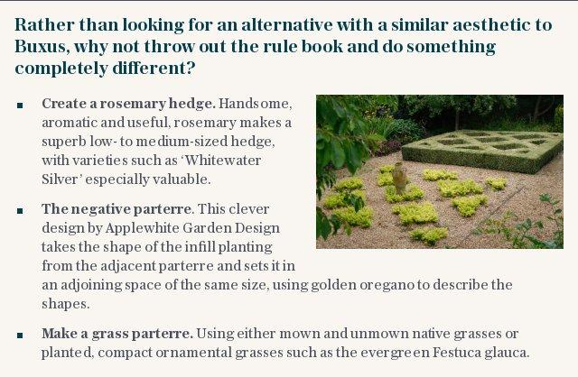 Rather than looking for an alternative with a similar aesthetic to Buxus, why not throw out the rule book and do something completely different?