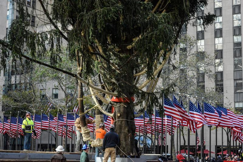 Workers place the Rockefeller Center tree on its base.