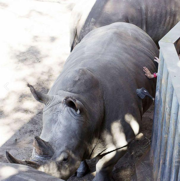 Rhinos won't be punished at zoo where girl fell into exhibit