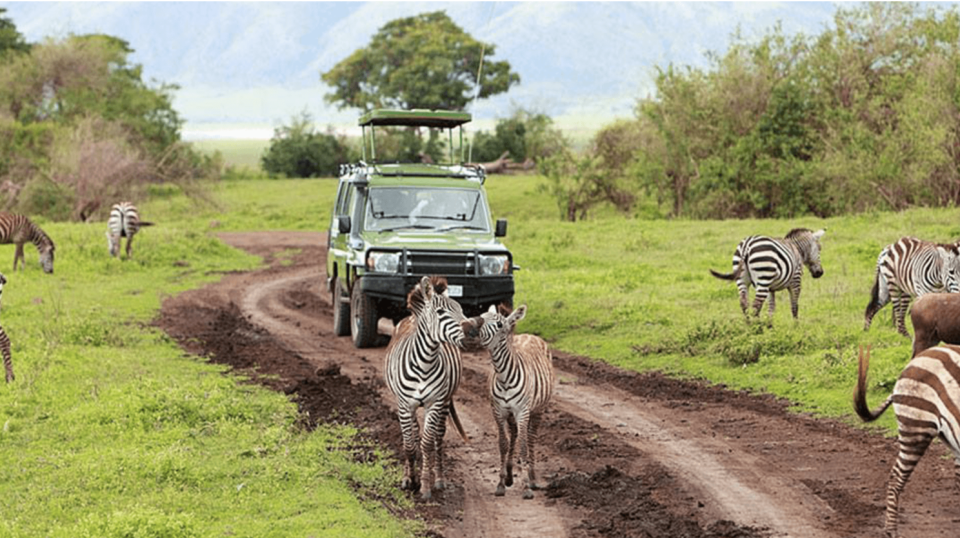 Safari tour in Rwanda gets you up close and person with wildlife.