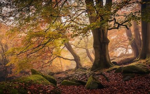 Dave Fieldhouse's 'Autumn in Padley Gorge'