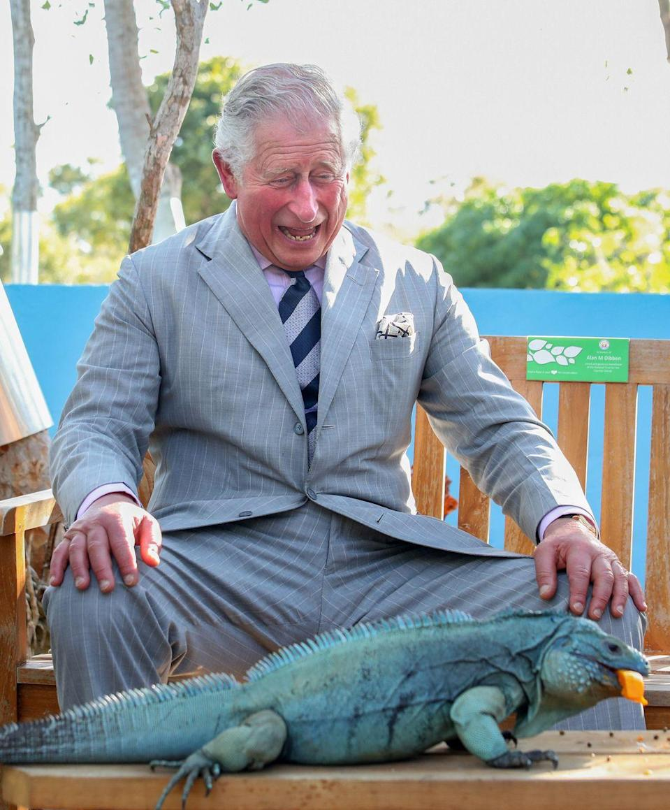 <p>Clearly, Charles was amused by this giant iguana during his trip to Grand Cayman.</p>