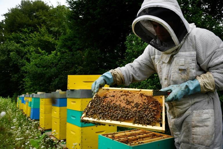 Some apple growers call on professional beekeepers to ensure orchards are pollinated