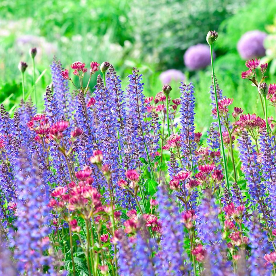 """<p>A <a href=""""http://www.housebeautiful.co.uk/garden/plants/tips/a1343/spring-summer-flowering-plants-buying-tips/"""" rel=""""nofollow noopener"""" target=""""_blank"""" data-ylk=""""slk:cost effective"""" class=""""link rapid-noclick-resp"""">cost effective</a> way to fill flowerbeds with great looking plants is to buy perennials that you can divide. This may sound like advanced level gardening but really it isn't. It will work with clump-forming perennials such as geums, astrantia and hardy geraniums. </p><p>Simply tip the plant out of its pot and pull it apart into two or three bits, each with some stalks and root. Dig a hole and plant each part in your flowerbed. Next year when they've grown and spread, you can dig them up and pull them apart again to gain even more plants. </p><p>You'll get a <a href=""""http://www.housebeautiful.co.uk/garden/plants/a1795/best-flowering-plants-colourful-summer-garden/"""" rel=""""nofollow noopener"""" target=""""_blank"""" data-ylk=""""slk:wonderful display"""" class=""""link rapid-noclick-resp"""">wonderful display</a> in a couple of years for very little cash. Six geranium plants are usually enough to get going in an average sized garden.</p><p><a class=""""link rapid-noclick-resp"""" href=""""https://go.redirectingat.com?id=127X1599956&url=https%3A%2F%2Fwww.crocus.co.uk%2Fplants%2F_%2Fperennials%2Fplcid.2%2Fnumitems.100%2Fcanorder.1%2F&sref=https%3A%2F%2Fwww.housebeautiful.com%2Fuk%2Fgarden%2Fdesigns%2Fg28%2Fgarden-ideas-on-a-budget%2F"""" rel=""""nofollow noopener"""" target=""""_blank"""" data-ylk=""""slk:Shop a wide selection of perennial plants at Crocus"""">Shop a wide selection of perennial plants at Crocus </a></p>"""