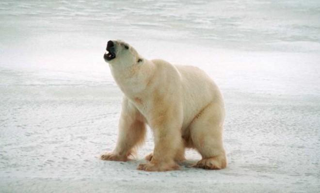 Say goodbye to your home, polar bears: Unless the U.N. takes radical steps, the world is likely to cross into the no-turning-back phase of global warming.