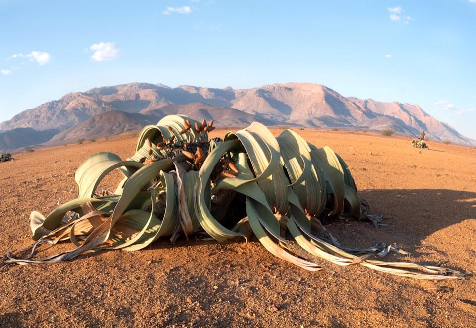 plant in the middle of the dessert