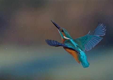 Kingfisher spotting is a highlight - Credit: getty