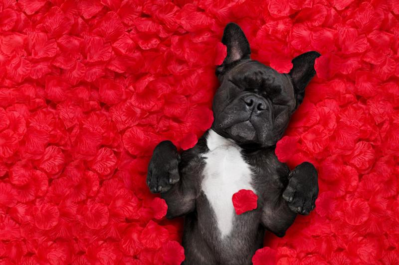 Everyone loves Valentine's Day (Shutterstock / Javier Brosch)