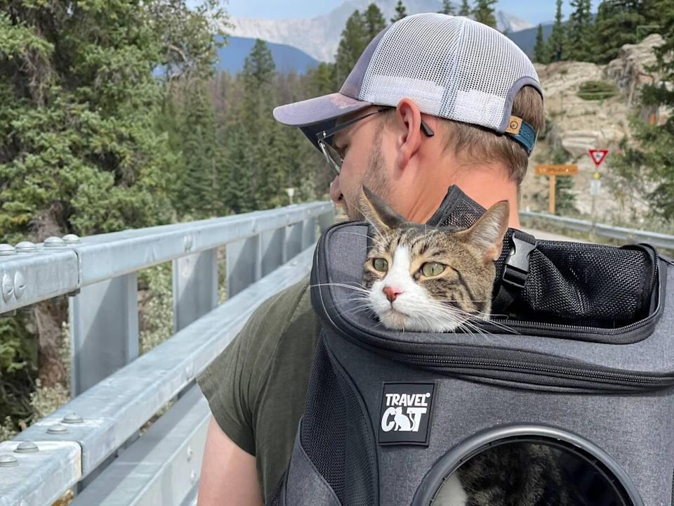 Edmonton's Instagram cat Draco went missing during a hike in Jasper National Park in August. After 49 days in remote wilderness, Draco is home in Edmonton.  (Submitted by Alix Lizaire - image credit)