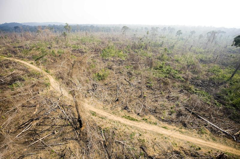 Imazon's Deforestation Alert System found that clearcutting in Brazil's nine Amazon basin states hit 244 square kilometers for October