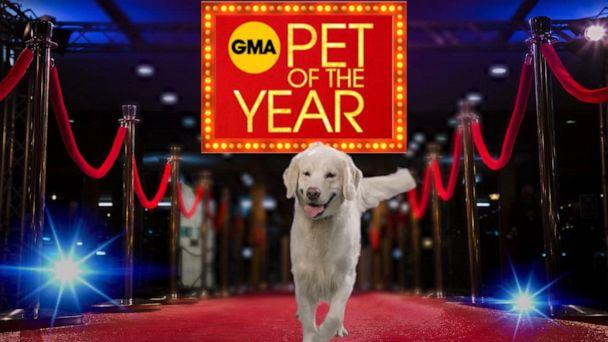 PHOTO: GMA's Pet of the Year! (ABC)