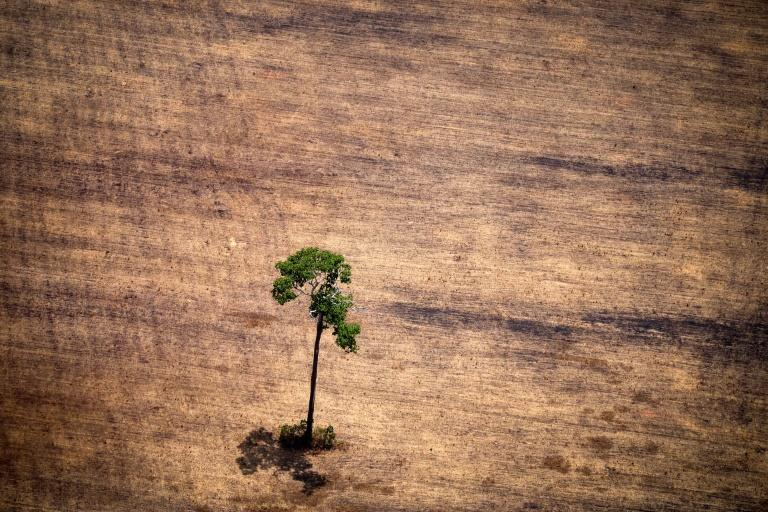 INPE is already in Brazilian President Jair Bolsonaro's crosshairs over data showing a surge in deforestation in recent months