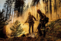 Firefighter Austin Cia sprays water as the Windy Fire burns in the Trail of 100 Giants grove in Sequoia National Forest, Calif., on Sunday, Sept. 19, 2021. (AP Photo/Noah Berger)