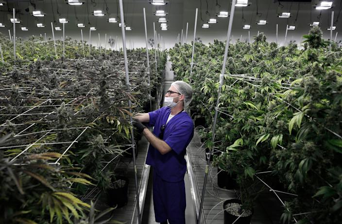 Marijuana farm in Las Vegas.