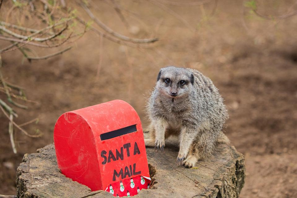 <p>Crickets were hidden inside miniature postboxes for the meerkats</p>PA