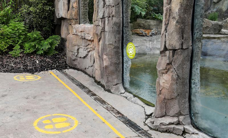 Social distancing measures at Chester Zoo. (Photo: PA)