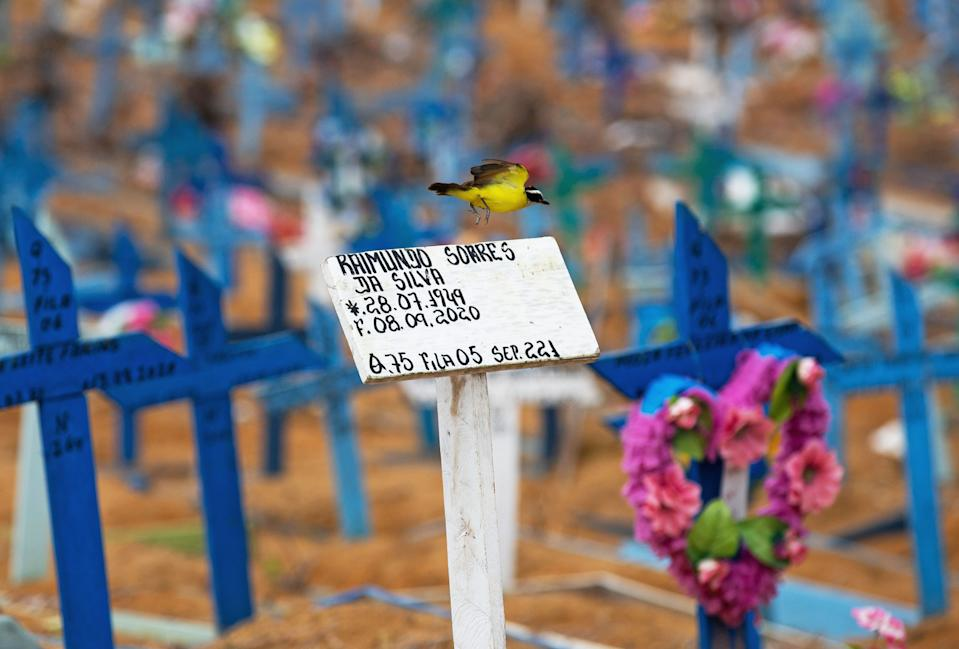 A bird flies over a cross in an area reserved for the burial of COVID-19 victims at the Nossa Senhora Aparecida cemetery in Manaus, Brazil, on January 5, 2021. (Photo by MICHAEL DANTAS / AFP) (Photo by MICHAEL DANTAS/AFP via Getty Images)