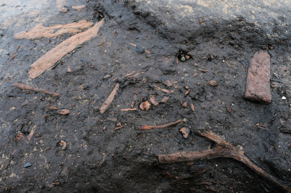 <em>The bones of deer and wild boar have previously been found in the woodland (Getty)</em>
