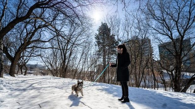 A little soggy dog walks in Ottawa in March 2021 as its snowpack starts to melt. (Brian Morris/CBC - image credit)