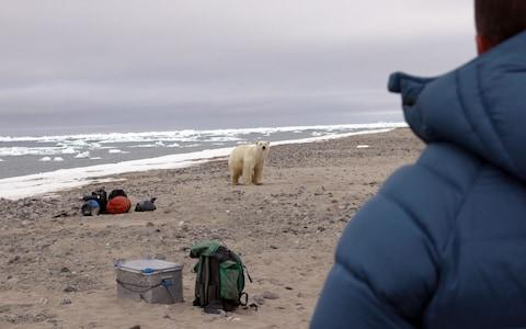 At its nearest point, the bear was just eight metres away - Credit: True to Nature