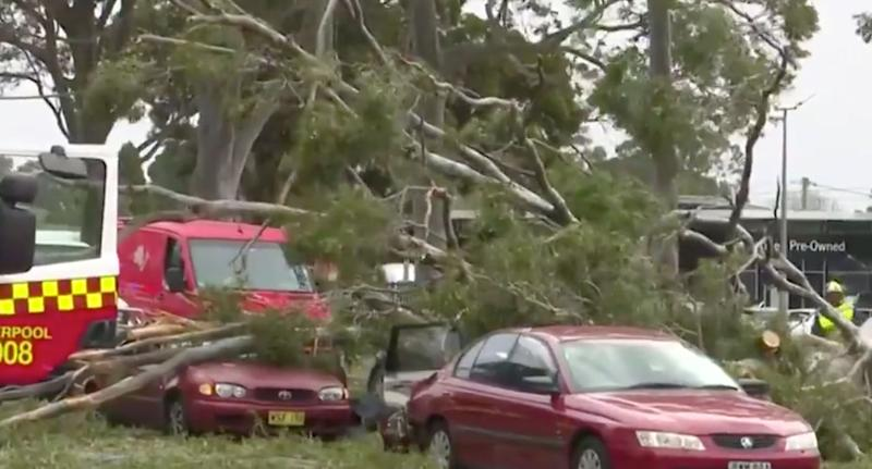 Cars were seen crushed beneath massive branches on Hume Highway. Source: Nine News