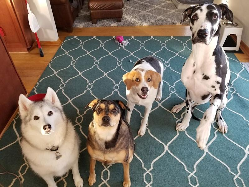 Coopers with his puppy brothers and sisters